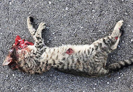 PFOTENHILFE nach grauenvollem Unfall: Katzenhaltung an Durchzugsstraßen verantwortungslos