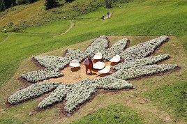 Tiroler Edelweiß-Blütenmeer verdoppelt bisherigen Weltrekord