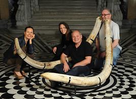 Aktionstag im NHM Wien zum Bullendorfer Mammut – dem bedeutendsten österreichischen Mammutfund des 21. Jahrhunderts