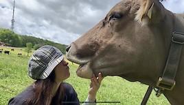 Landliebe 2.0: Kühe küssen für den guten Zweck (FOTO)