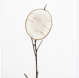 """Sonderausstellung: """"FLORA PHOTOGRAPHICA. Die Zeit dazwischen"""" Fotografien von Petra Lutnyk"""
