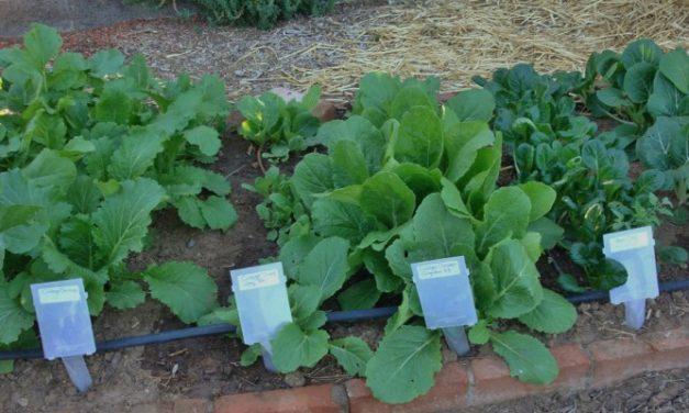 Toller Garten – Das ultimative Ziel für alles, was mit Garten zu tun hat