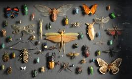 Naturhistorisches Museum Wien unterstützt Biodiversität in vollem Umfang: