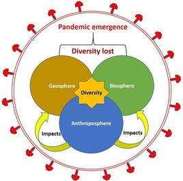 COVID-19 und andere Pandemien entstehen durch negative menschliche Einflüsse auf die Diversität der gesamten Umwelt