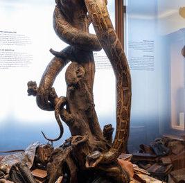 Neuer Bereich zum Thema Artenschutz im Naturhistorischen Museum Wien