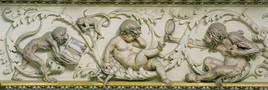 Naturhistorisches Museum Wien und die Evolution