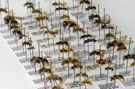 Das Naturhistorische Museum koordiniert das Projekt ABOL österreichweit für weitere drei Jahre