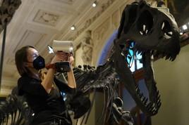 Naturhistorisches Museum in 3D: 3D-Modelle von Museumsobjekten jetzt online verfügbar