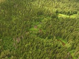 Fokus Klimawandel: Mondi kooperiert mit der International Union of Forest Research Organizations (IUFRO)
